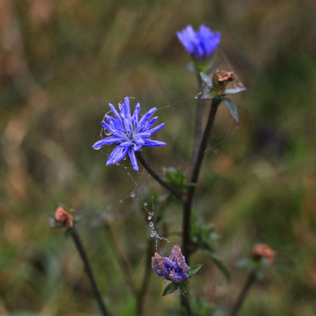nebelbenetzte Blüte